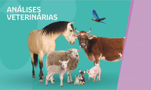 Confira o portfólio de análises veterinárias